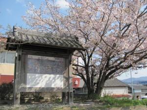 宮川・桜の渡し(下の渡し)