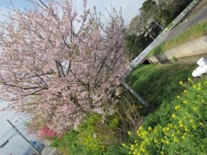 JR田丸駅へ向かう道沿い(華やかな花々)