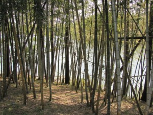 坂手国生神社の向いにある池