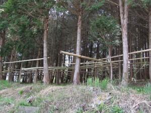 田宮寺へ向う手前の坂の左側(杉の木が竹で縛られている)