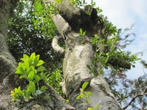 田宮寺神社脇の木