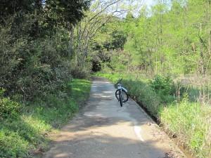 湿地帯から林道へ