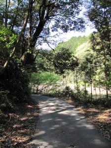 国道42号へ抜ける林道