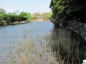 松下社近くの池