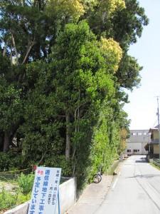大土御祖神社 (おおつちみおやじんじゃ) 皇大神宮 摂社