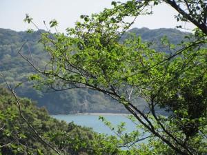 旅荘 海の蝶の裏からの眺め