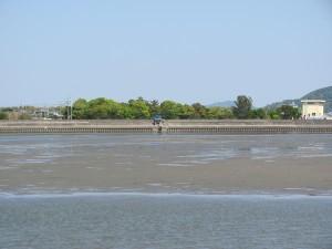 五十鈴川左岸から御塩浜の森を望む
