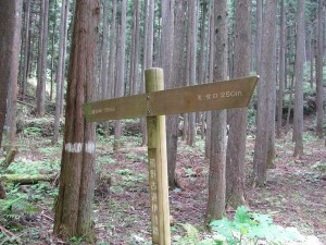 熊野古道 里登り口から三瀬坂峠へ