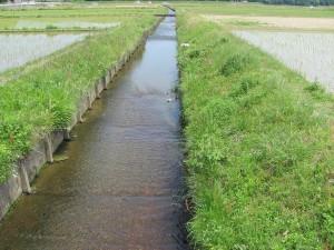 振り返って田乃家神社の杜を撮影した橋から水路を