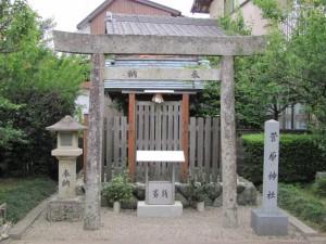 臥龍梅(菅原神社)