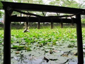 船江上社 朧ヶ池