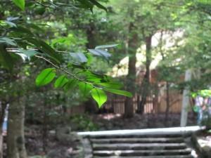 滝祭神から風日祈宮へ向かう途中御厩を望む