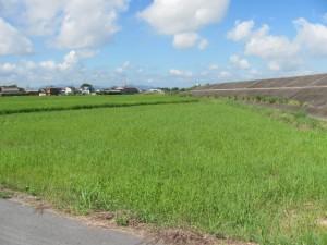 御薗町小林の田園風景