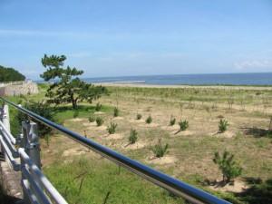 防風、防砂林の植林