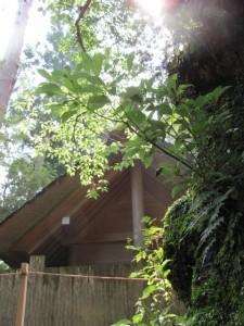 風宮の近くの大樹