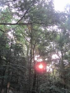 朝日(御正宮の石段下)