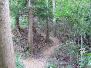 ロマンの森