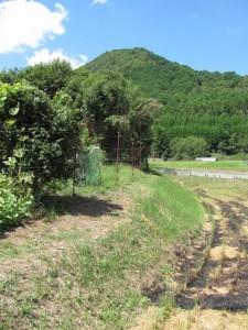農村体験(ふるさと村)