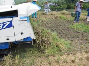 稲刈り体験(ふるさと村)
