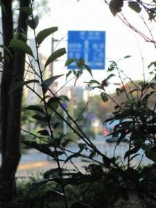 宮域から県道を望む
