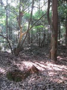 神麻続機殿神社