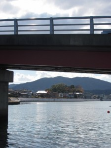 勢田大橋下から橘神社の社叢を望む