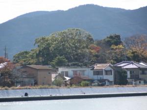 橘神社の社叢を望む