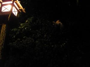 樹上で眠る神鶏
