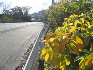 国道42号線沿い