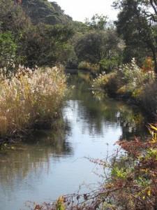 小川の風景