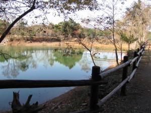 散策路の池(アスピア玉城)