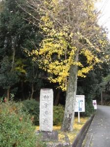 神宮司庁への道