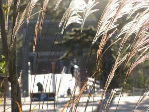 宇治橋前駐車場から宇治橋を望む