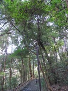 多賀宮への石段下(仮設照明)