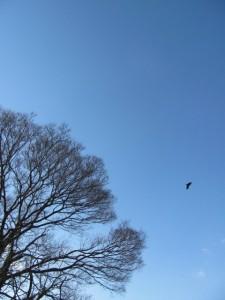 桜の渡し跡付近