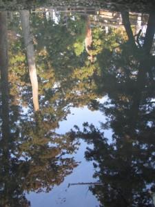 御池に映る御正宮