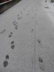 2011年の初雪(自宅付近)