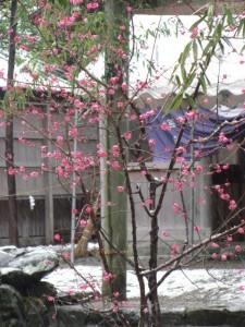 2011年の初雪(須原大社)