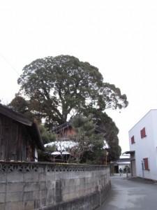 宇須乃野神社の社叢
