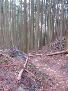 三瀬坂峠から三瀬川登り口へ