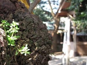 楠社から(箕曲中松原神社)