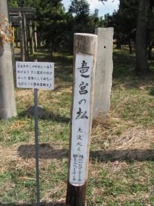 竜宮の松(大淀漁港)
