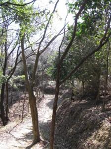 ロープウェイ跡から山頂へ(音無山)