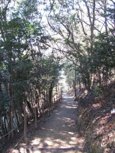 山頂から吊り橋へ(音無山)