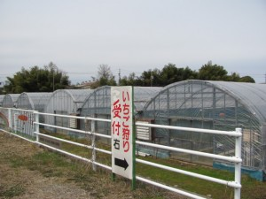 玉城ふれあい農園