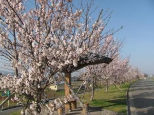 ラブリバー公園(宮川)堤防道路