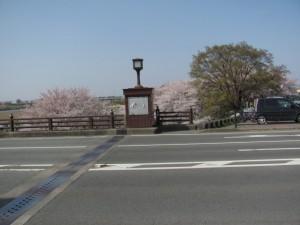 度会橋から宮川右岸の桜を望む