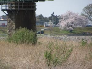 桜の渡し跡