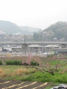 玉列神社からの眺望