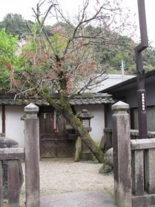 長谷寺の参道